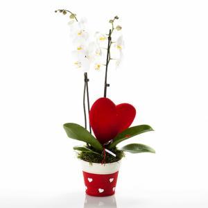 Orquídea Apaixonada