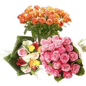Todas as rosas